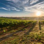 Comment choisir un vin blanc sec ?